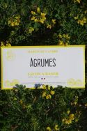 Shaving Soap Envelope - Agrumes